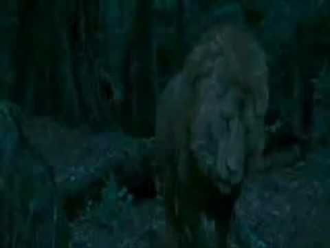 ▶ The Chronicles of Narnia Full Movie Part 11 - YouTube