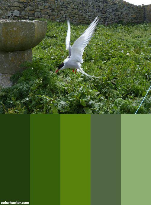 P1090913+Color+Scheme