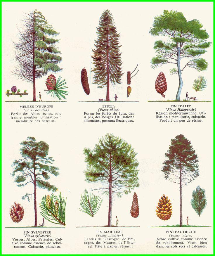 Les arbres 1ab.gif (922×1098)