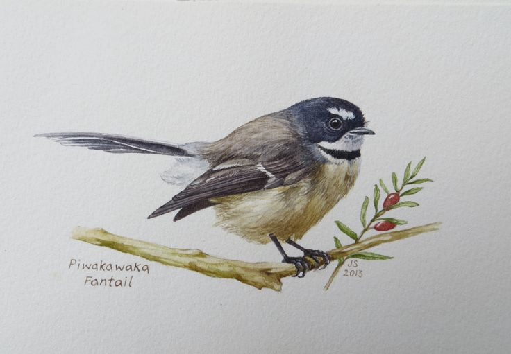 Fantail-Piwakawaka 2  Watercolour 300x200mm