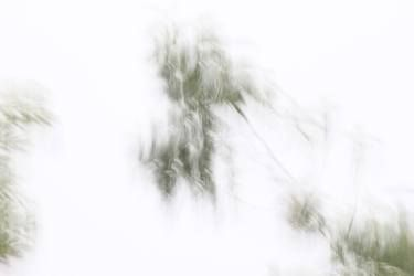 Embracing Trees 3 - Limited Edition 1 of 5