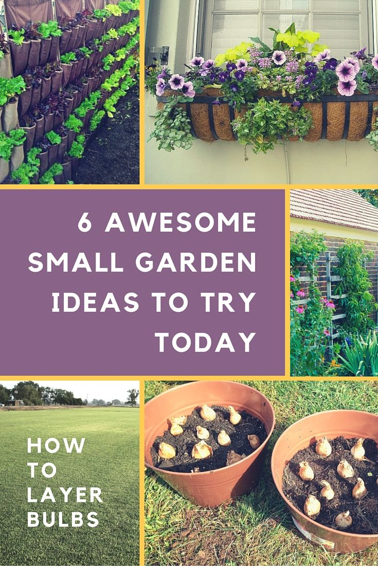 When how to plant daffodil bulbs - 6 Awesome Small Garden Ideas To Try Today Including A How To Tutorial For