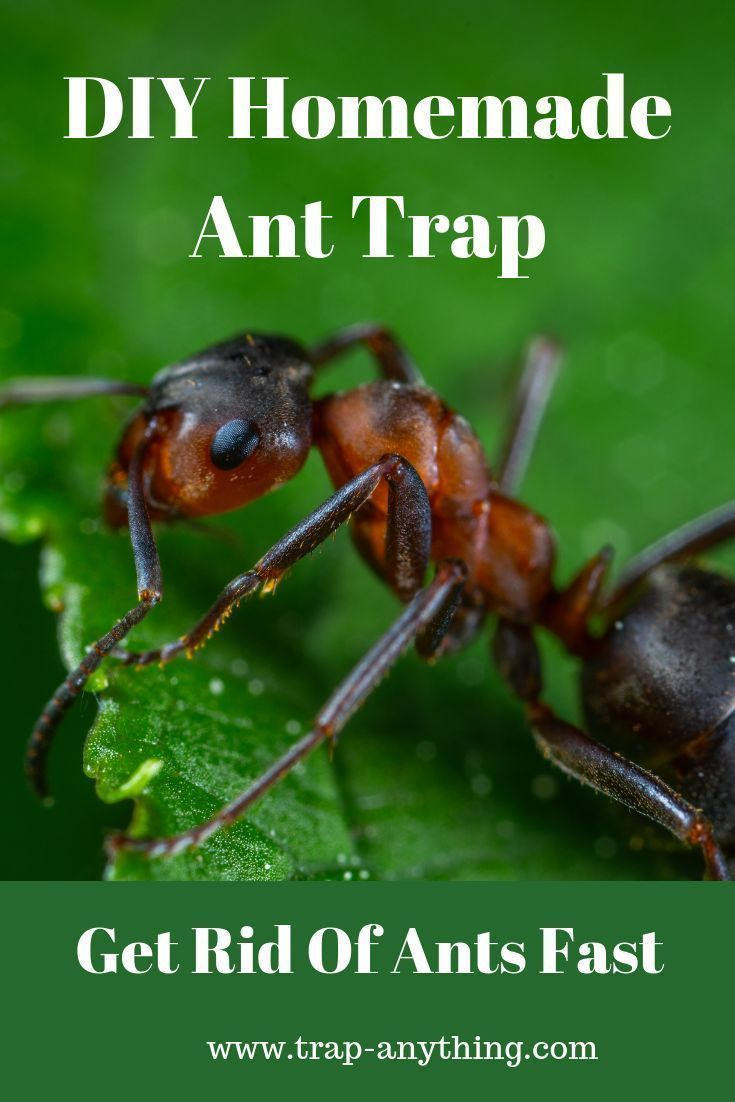 d9c603444d970eae0ee8a66974a6a488 - How To Get Rid Of Ants Nest In Flower Pot