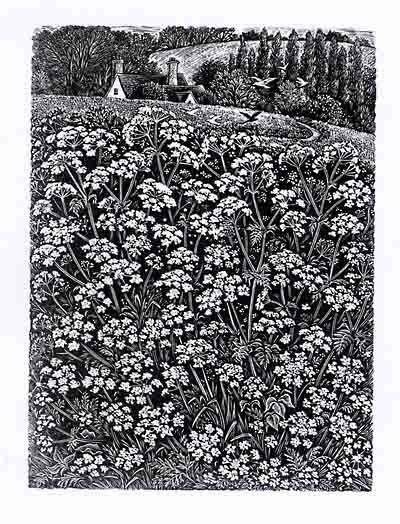 Queen Anne's Lace...Sue Scullard