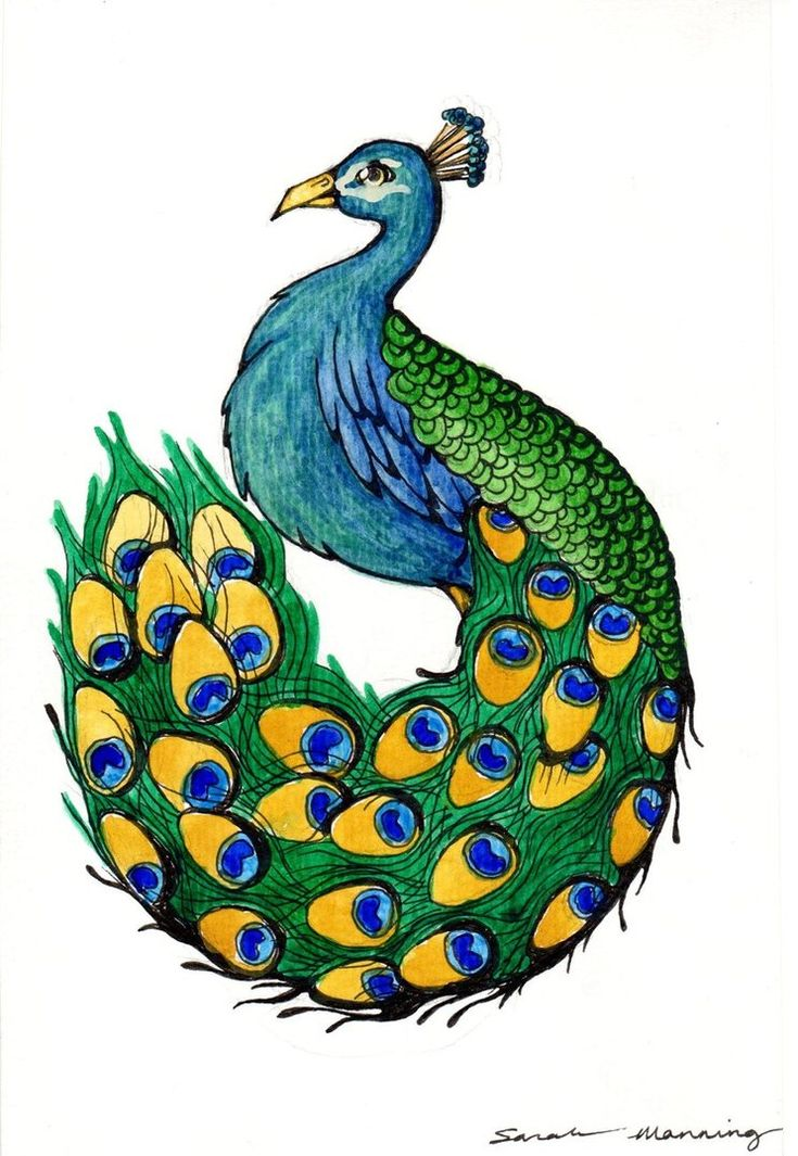 how to draw a peacock peacock drawing pictures