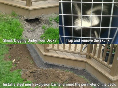 How to Get Rid of Skunks in Yard or Under House - Steps ...