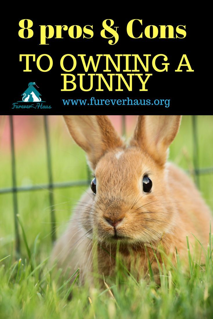 Bunnies Make Great Pets In The Right Circumstances Learn Before You Buy 8 Pros And Cons To Bunny Best Pets For Kids Pet Sitters International Pet Care Tips