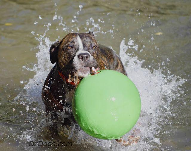 DZ's Adventures: Heat Exhaustion In Dogs