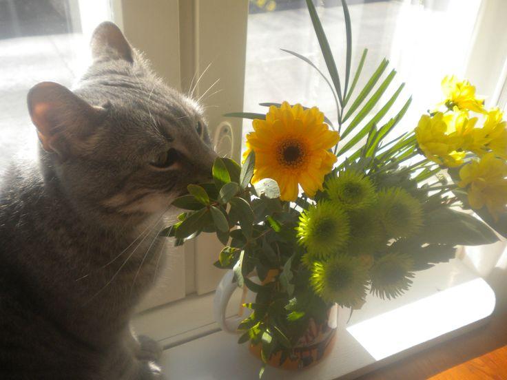 .Flower cat <3<3<3<3<3<3<3<3<3<3<3<3<3<3<3<3<3<3<3<3<3<3<3<3<3<3<3<3<3<3<3<3<3<3<3<3<3<3<3<3<3<3<3<3<3<3<3<3<3<3<3<3<3<3<3<3<3