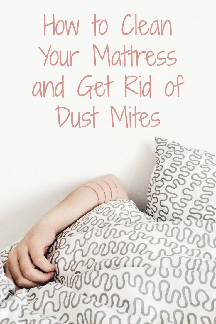 how to get rid of dog mites in your home