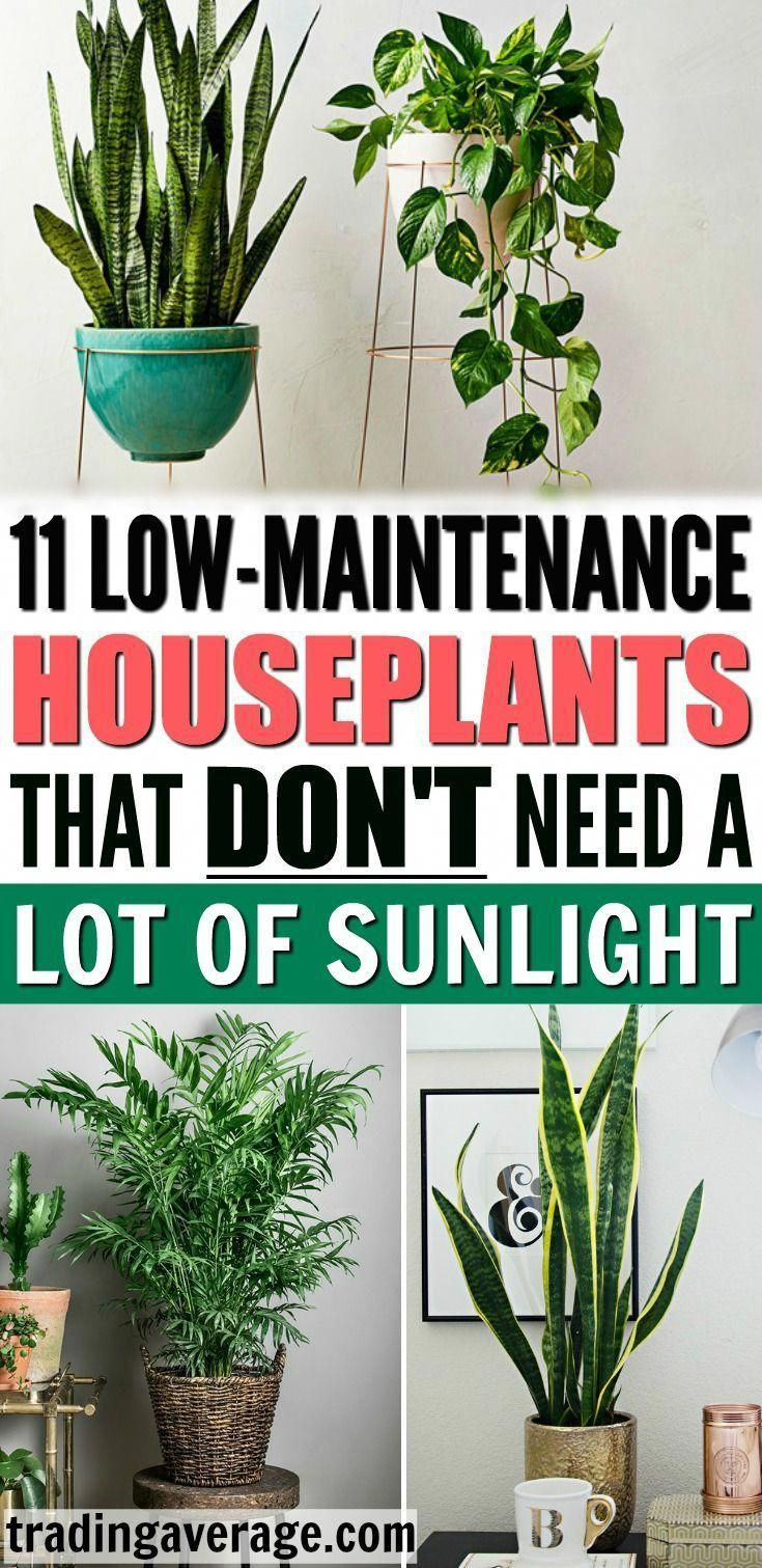 Looking For Houseplants That Don T Need Much Sunlight This Article Will Give You 11 Low Maintenance Indoor Plants Are Easy To Take Care Of