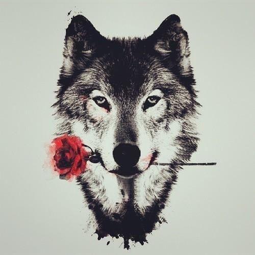 Wolf illustration wallpaper
