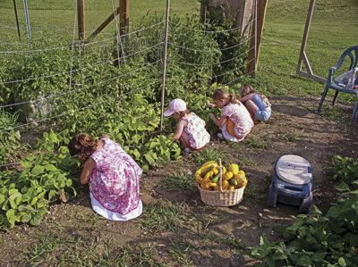 9 Things to Consider Before You Ever Grow a Survival Garden | Ready Nutrition