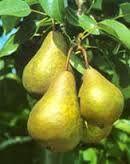 fruit plukken ppt lmdb http://leermiddel.digischool.nl/po/redir/bestand/3f6039434bd93150a7cd9664293bb709/peren_aan_de_boom.ppt