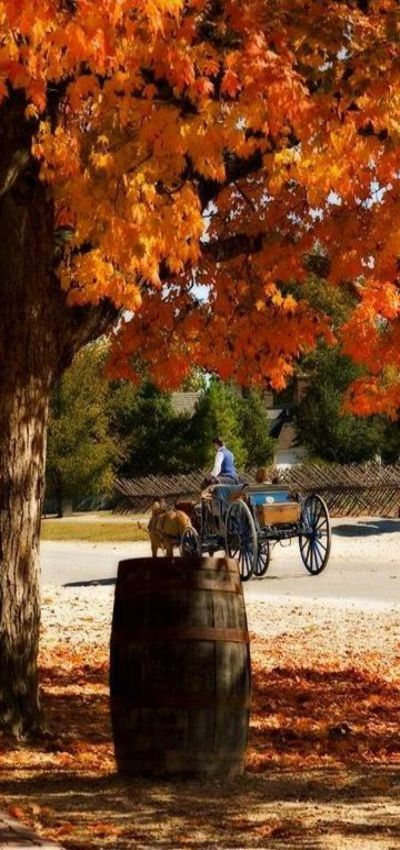 Carriage ride in Colonial Williamsburg                                                                                                                                                                                 More