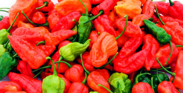 Growing ghost peppers                                                                                                                                                                                 More