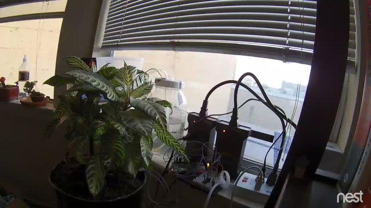Un Raspberry Pi, une caméra Nest, et un forum reddit pour arroser une plante verte - https://lkn.jp/2xASWUm