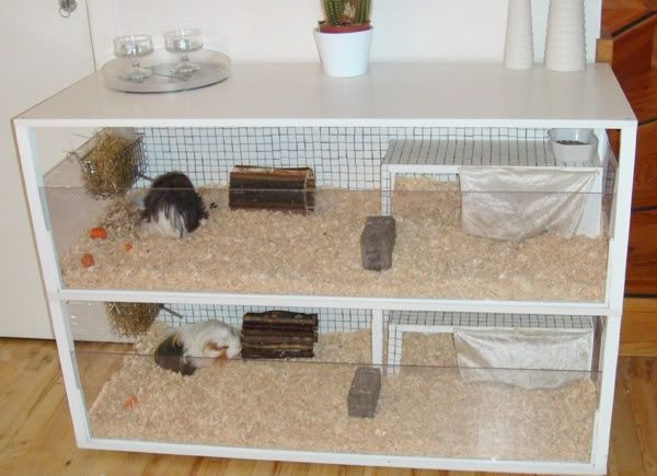 Guinea pig cages homemade guinea pig cage stairway of for Diy guinea pig hutch