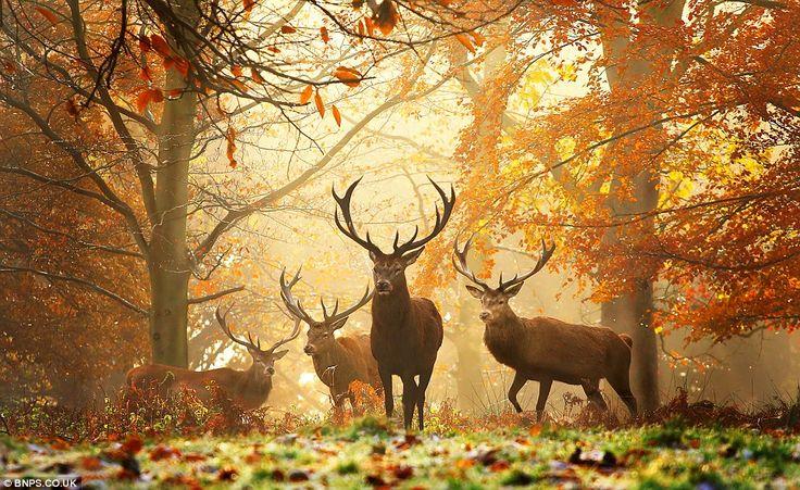 Best Park  - Photo from Richmond Park by Alex Saberi