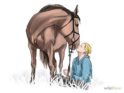 How to Train a Horse -- via wikiHow.com