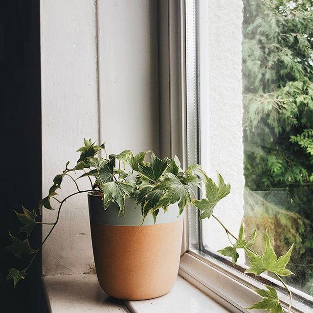 Diy Windowsill Planter: Best 25+ Window Sill Decor Ideas On Pinterest