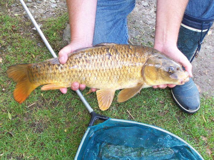 Fish at Meadow Lakes