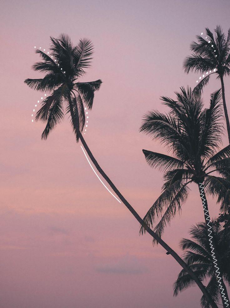 Pink sky & Palm trees - Johanna P.