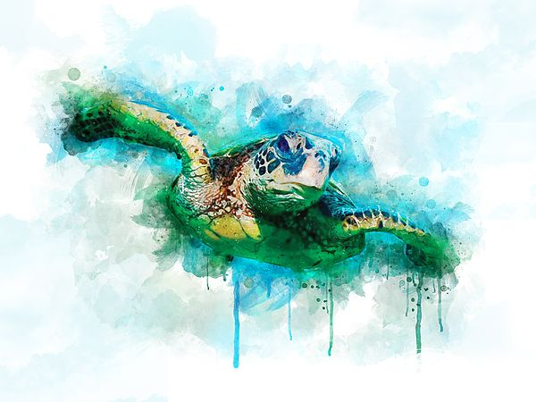 Sea Turtle Turtle Watercolor Drawing Sea