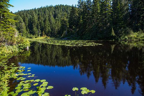 Chickadee Lake - - found it at buntzenlake.ca - this is a great website for hiking enthusiasts; and a lot of great photos!!!