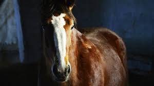 Картинки по запросу белые лошади в цирке