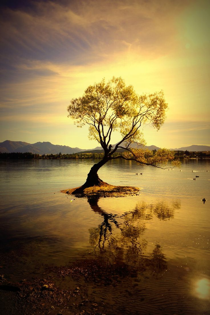 Golden Tree Illuminated In A Golden Sunset Lake Wanaka