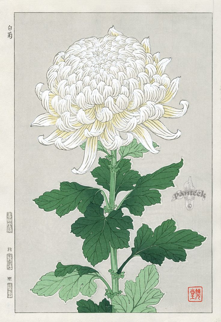 Shin Hanga Woodblock Botanical Prints 1939-1970's