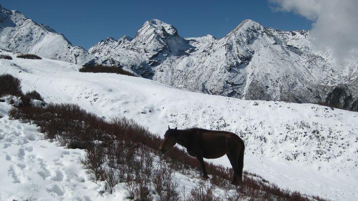 Horse, Nepal