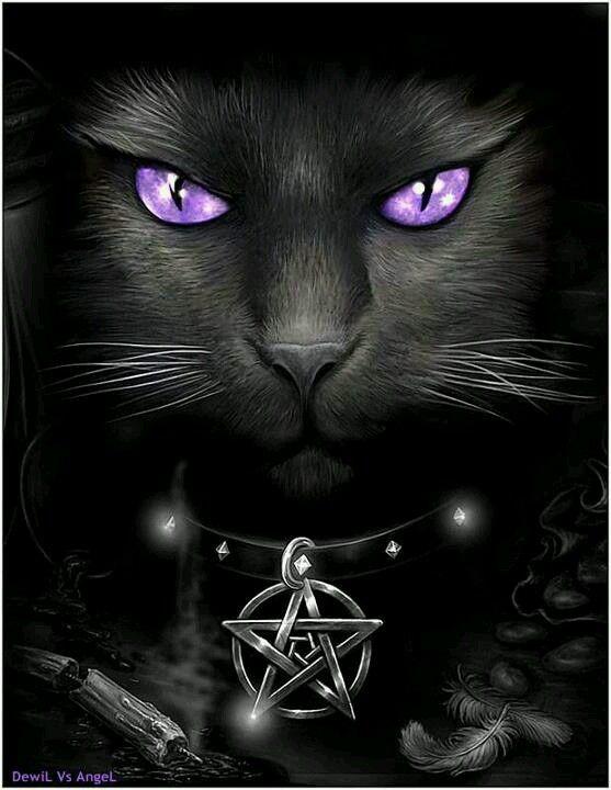 #GatoNegro... #Mistico... #Sobrenatural...