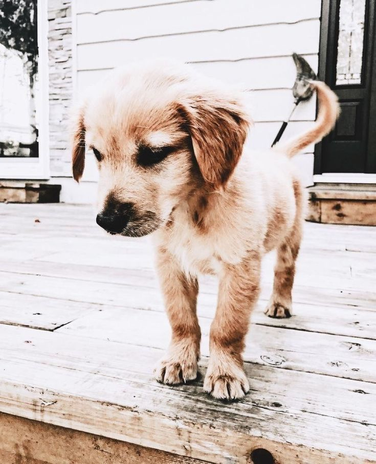 Pin by 𝙼𝚊𝚕𝚘𝚛𝚒𝚎 on pups (With images) Puppies, Cute dogs