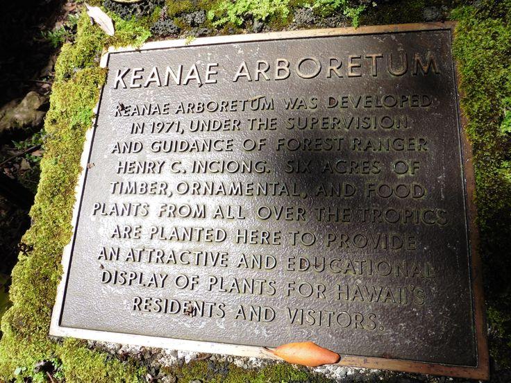 Maui, Havaiji. Keanae Arboretum on pieni, kaunis arboretum eli puulajipuisto Hana Roadin varrella.