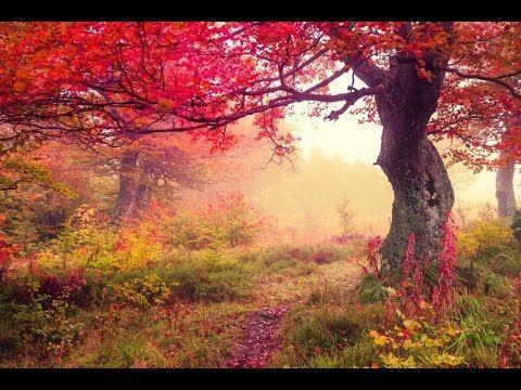 3 Hour Healing Meditation: Relaxing Music, Soothing Music, Calming Music, Relaxation Music ☯2201 - YouTube