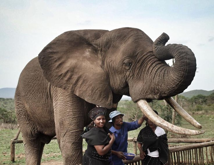 Yesterday we had our staff Christmas Party. The team was treated to an afternoon elephant interaction and an amazing game drive!