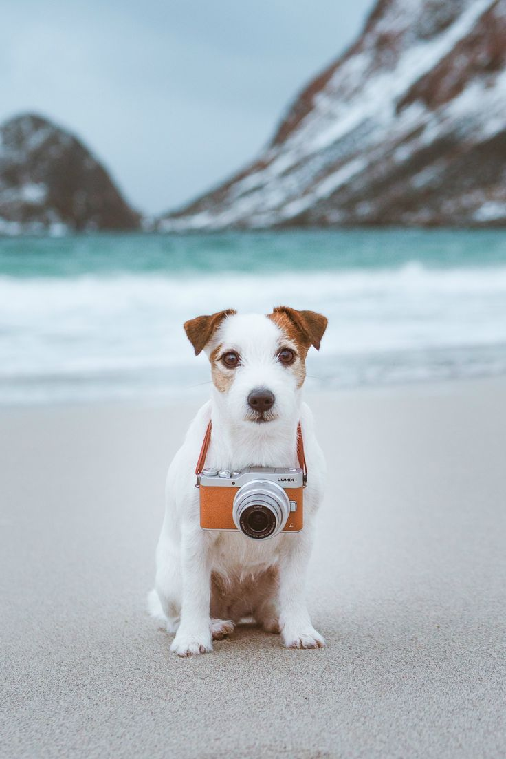 Sweet jack russel terrier puppy on the beach. Winter dog photography panasonic camera.