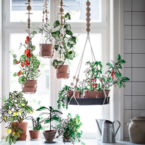 A high window with green plants in hanging plant pots.