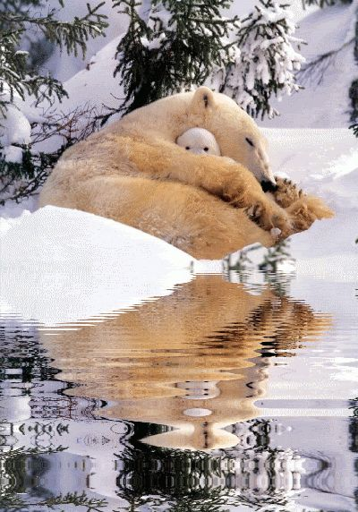 Polar Bear Mama & Baby