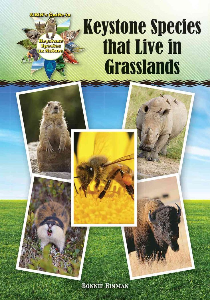 Keystone Species That Live in Grasslands (Hardcover