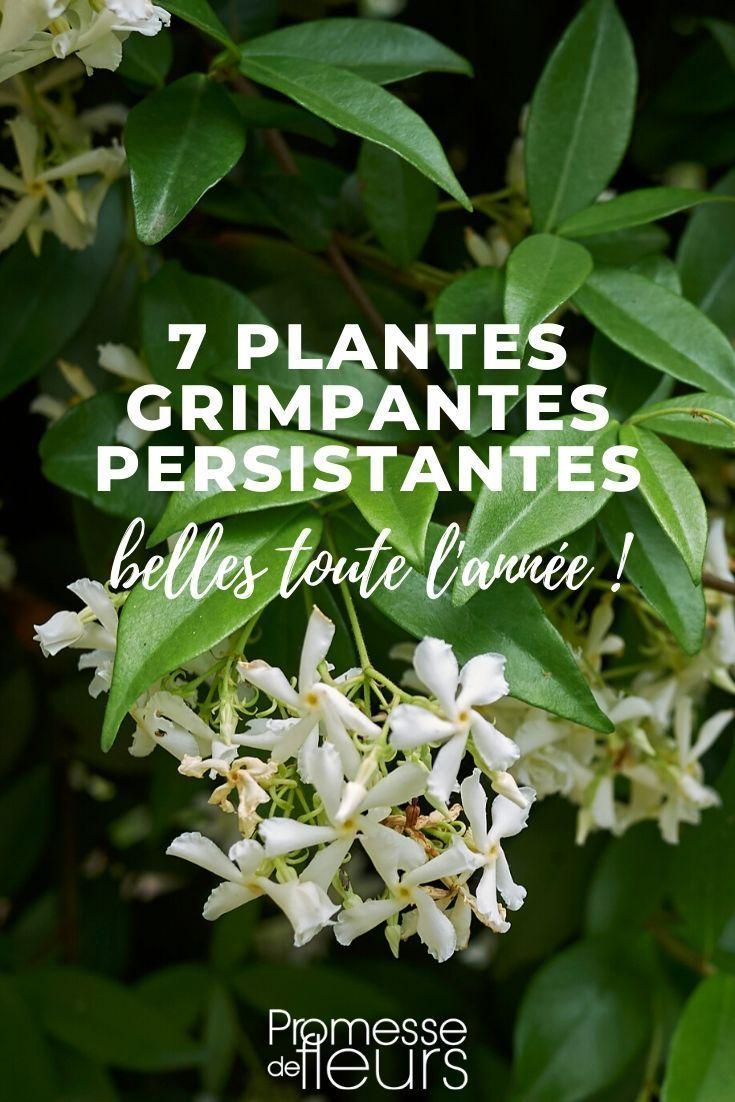 7 plantes grimpantes persistantes pour votre jardin | Plante ...