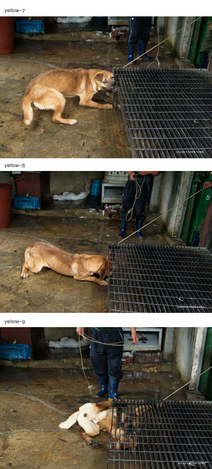 Terrified dogs are slowly tortured - in front of others waiting for the same treatment