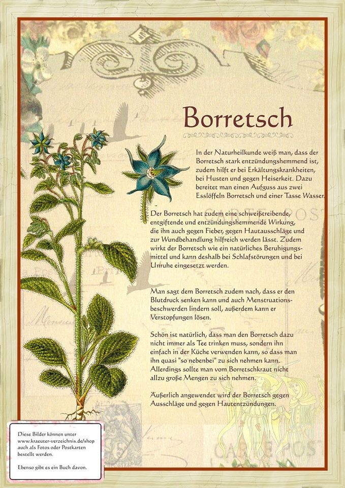 Borretsch http://www.kraeuter-verzeichnis.de/