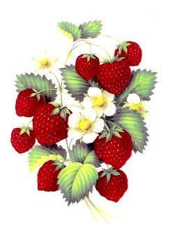 Фрукты-ягоды-овощи-грибы - Елена Гриценко - Веб-альбомы Picasa