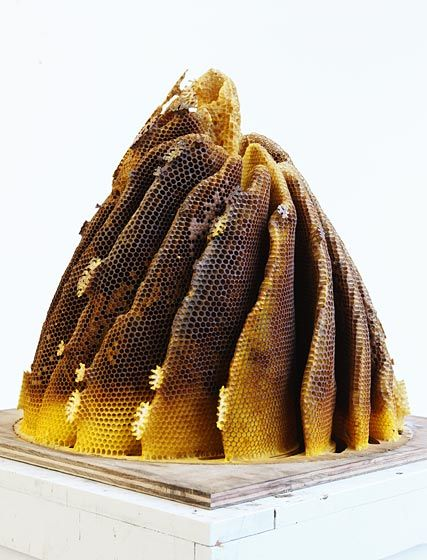 Artist Hilary Berseth collaborates with honeybees to create intricate sculptures made of beeswax and honey. He builds a template for the shape he wants, places it inside the hive in the Spring, and waits. (And waits.) The outcome is often different than he expects, as the bees riff on his guidelines and add their own input into the process. But that's how you arrive at a truly delicious partnership, right? @Jess Longobardo