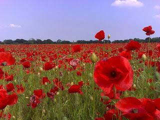War Poetry: The AQA GCSE English---Does It 'Teach Anything Meaningful'?