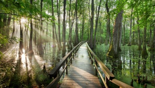 Would love to mark this national park off my list, looks so pretty (FREEDOM OF THE CYPRESS: A boardwalk trail winds through bald cypress and tupelo trees at Cypress Swamp, part of the Natchez Trace Parkway in Mississippi)