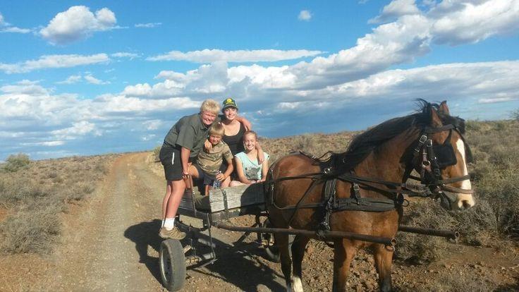 Horse carraige rides
